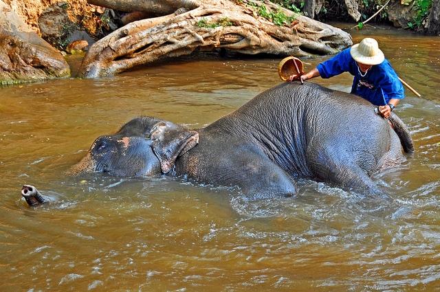Thailand_4146 - Maesa Elephant Camp